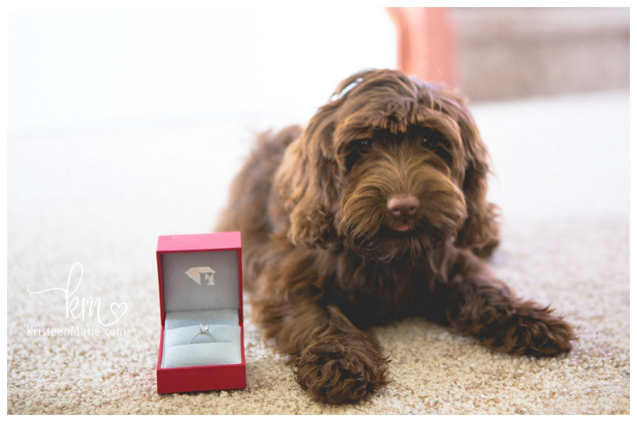 Puppy and Engagement Ring