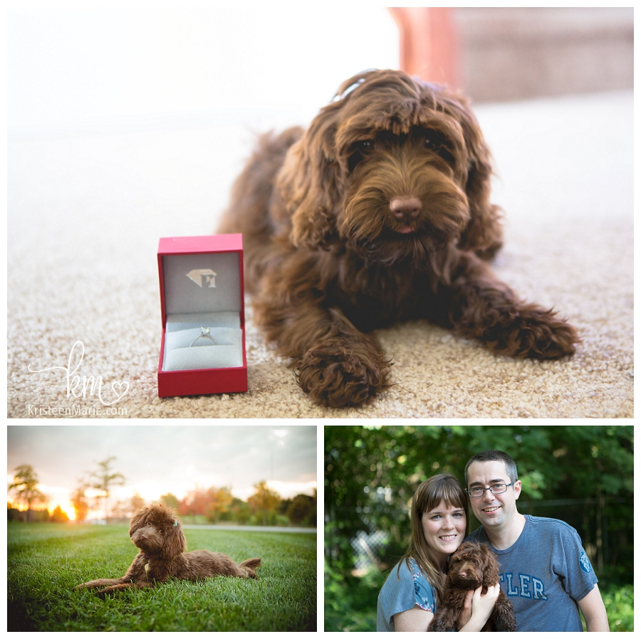 Engaged and puppy