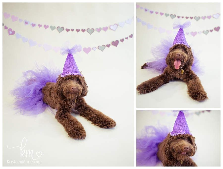 Puppy in a party outfit