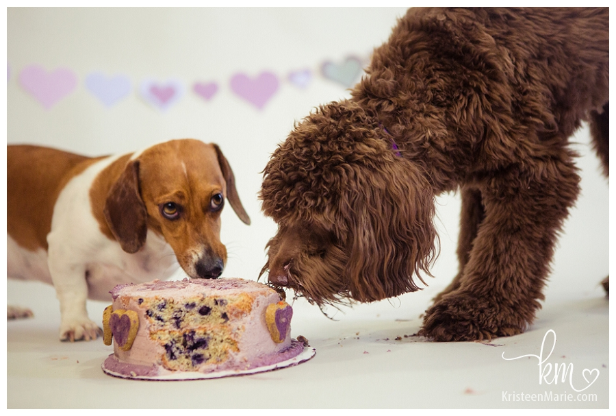 Dogs sharing birthday cake