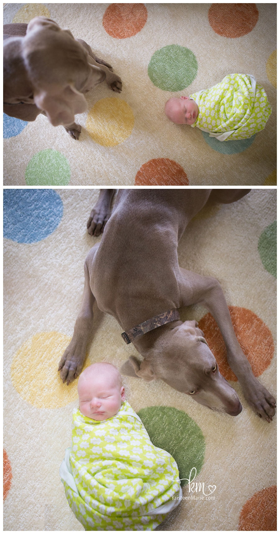 newborn with family dog