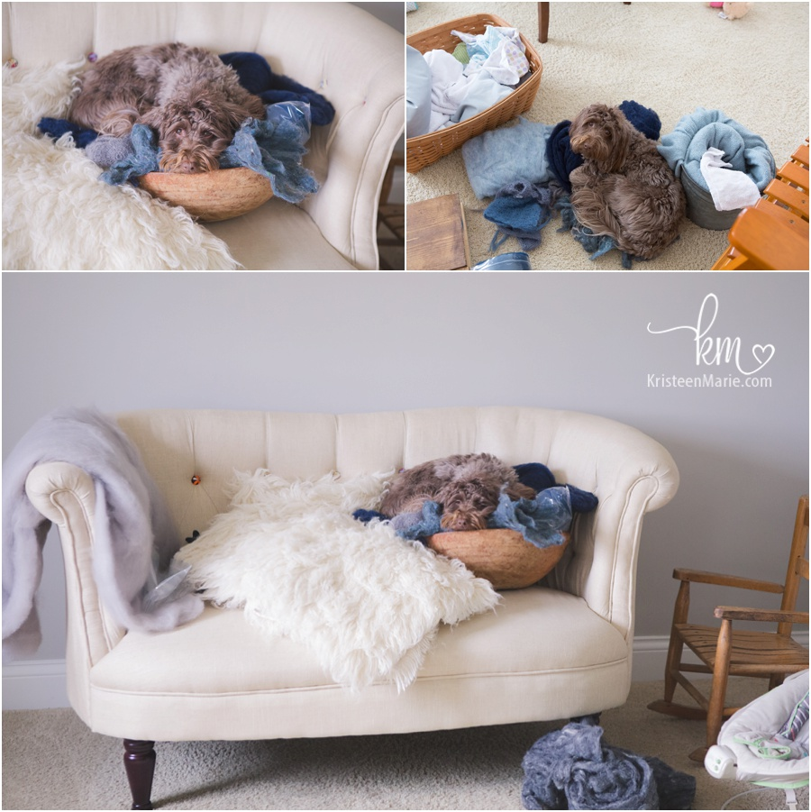 dog in the newborn photography studio