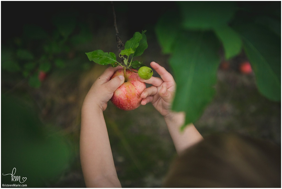 little hands picking apples