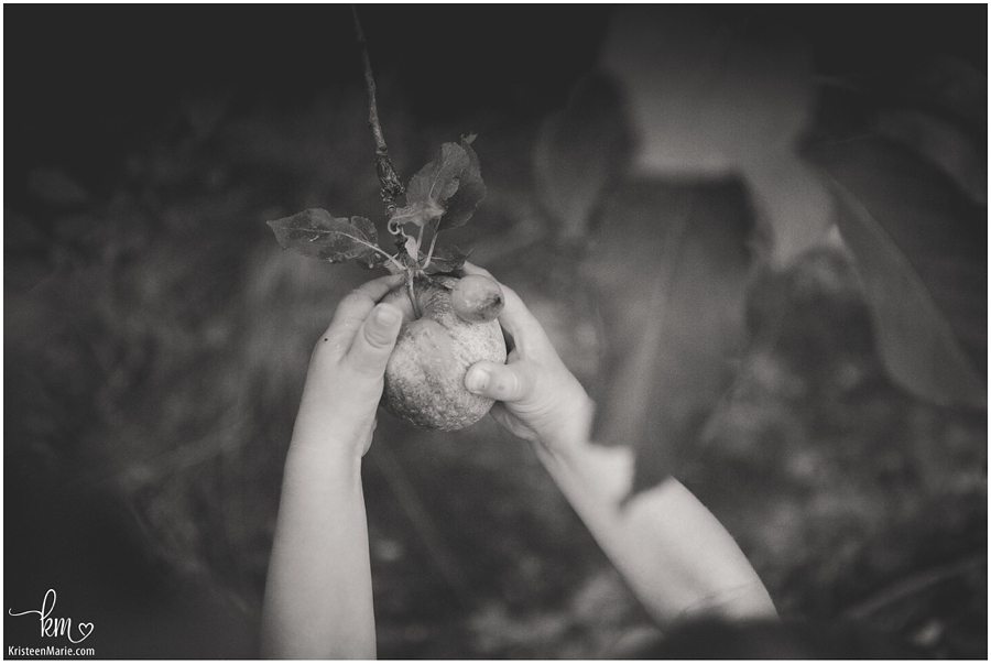 black and white - apple picking baby's hands