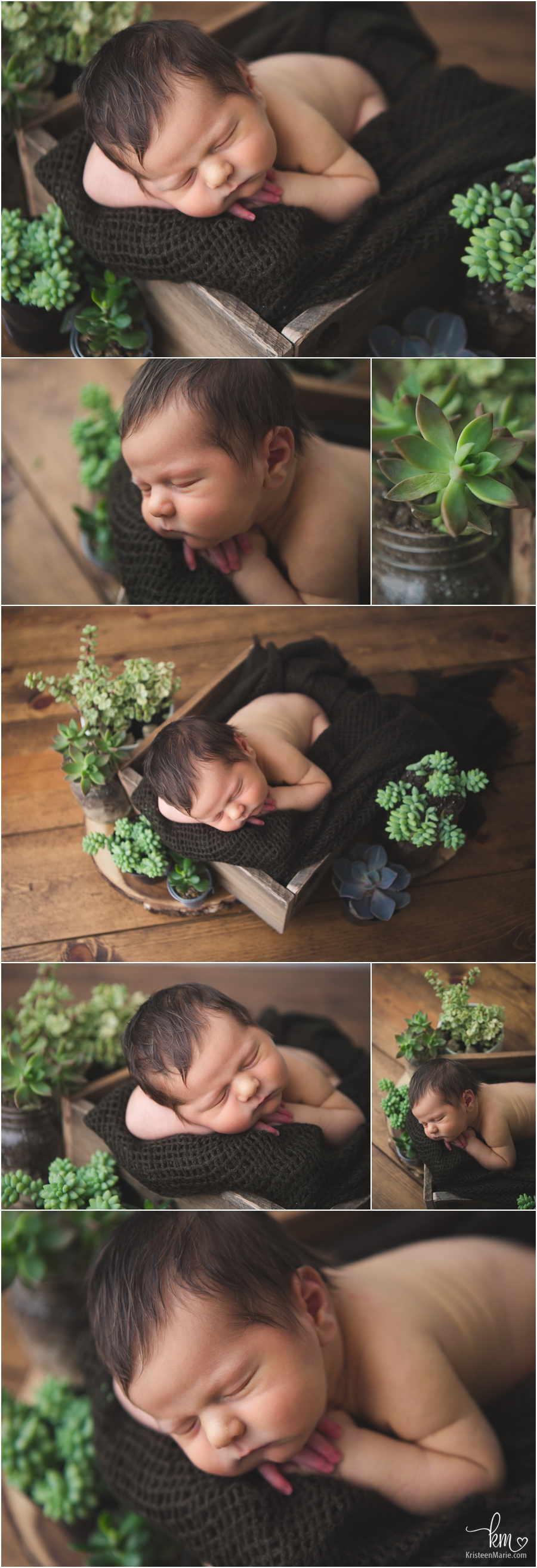 succulents and a newborn baby - plants and baby picture - adorable!!
