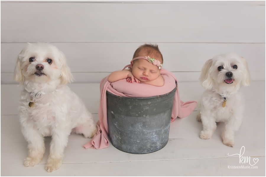 baby in a bucket with family dogs