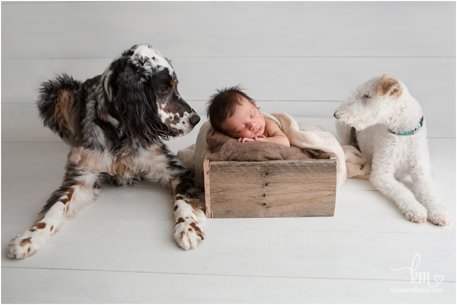 newborn picture baby and dogs