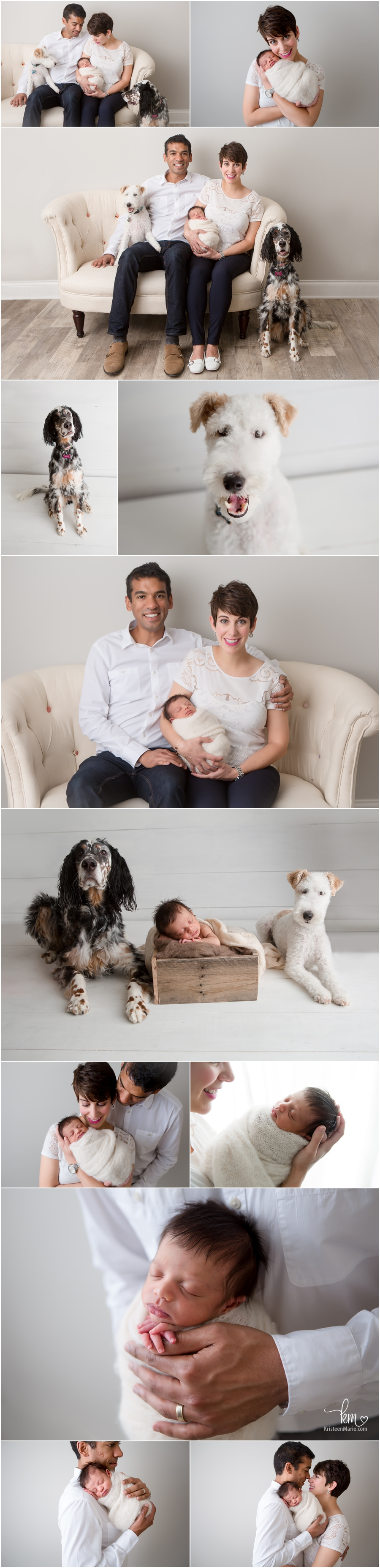 newborn pictures with the whole family - dogs included - Indianapolis family pictures