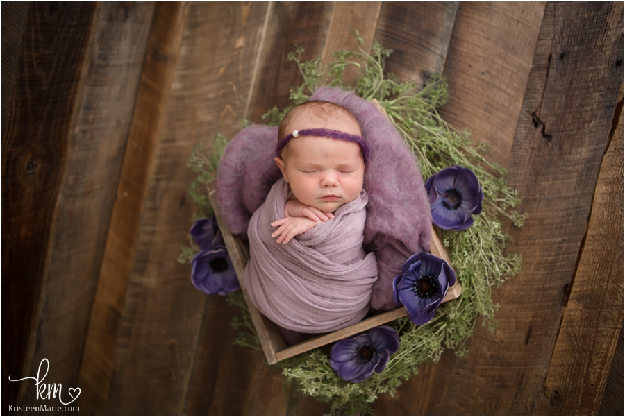 purple flowers newborn picture