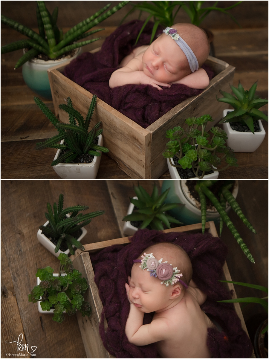 newborn baby girl with succulents