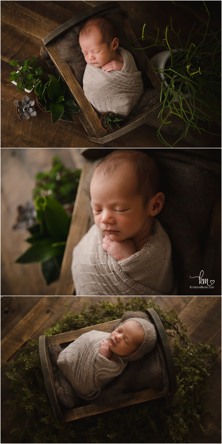 newborn baby boy with greenery and succulents