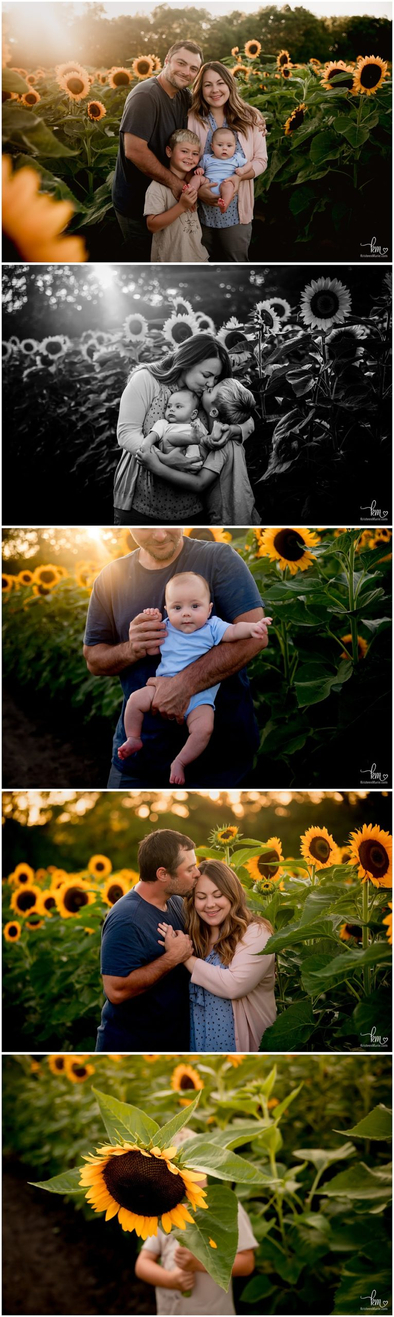 Indianapolis family photographer - sunflower session