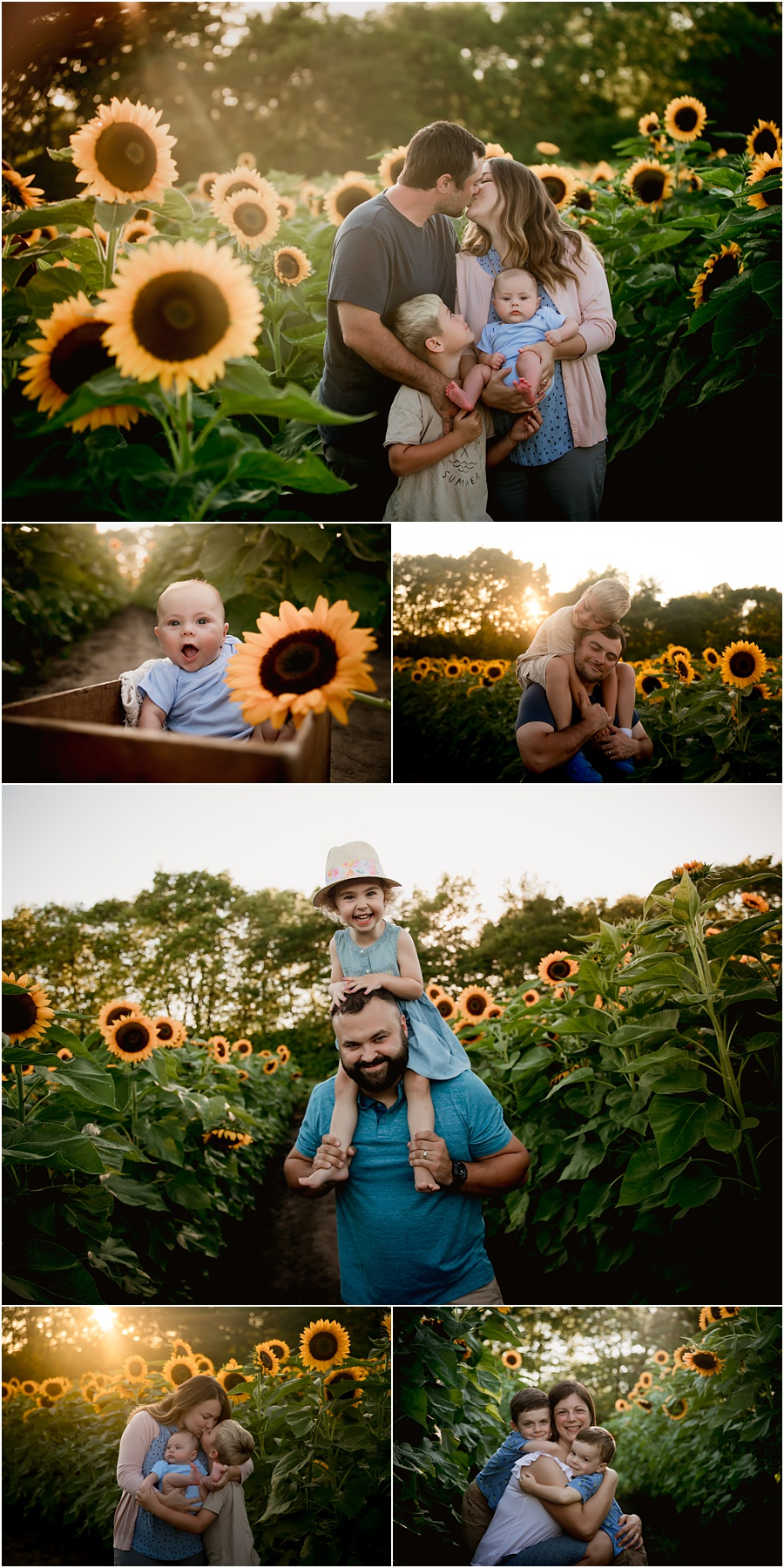 Sunflower field photography sessions in Indianapolis