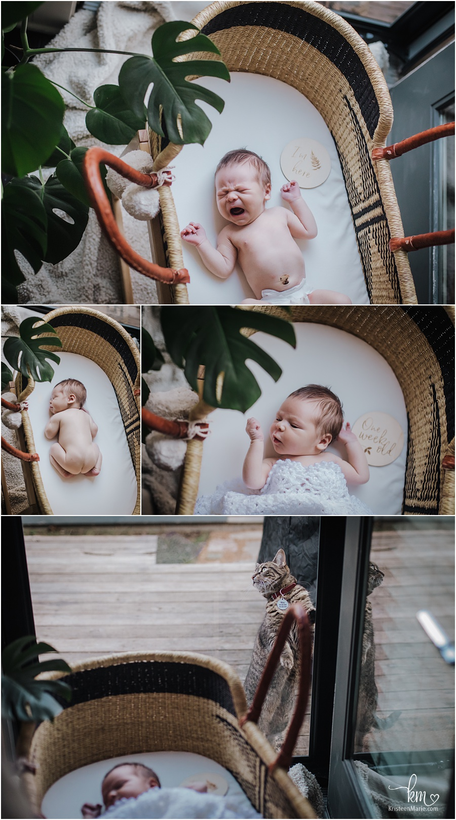 baby in basket and plants