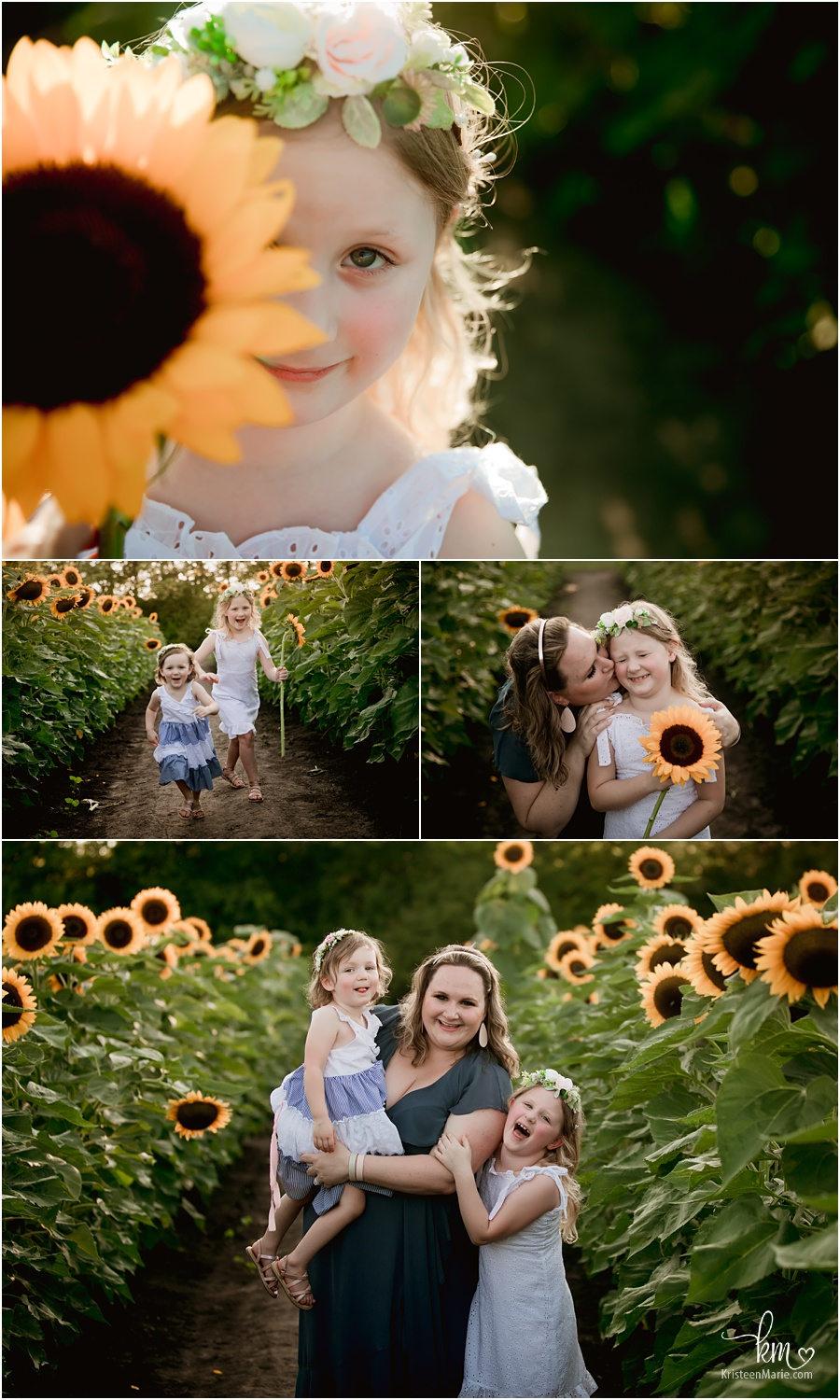 Sunflower family pictures